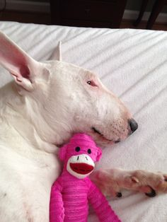 #Bully and her sock monkey