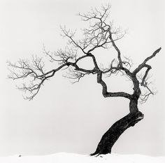 Michael Kenna Kussharo Lake Tree, Study 1 / Arbre du lac Kussharo, étude 1 Kotan, Hokkaido, Japan, 2002