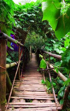 philippin, jungle, the bridge, tree houses, path, morning coffee, walkway, forest, bridges