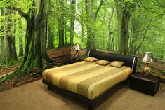 Forest Wall Mural Wall Murals Nature