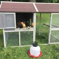 Happy Chicken Eviction Day!  They love their new chicken coop from Tractor Supply! #tractorsupply #chickencoop #mypetchickens #backyardchickens