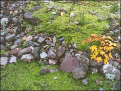 MOSSY ROCKS  This was taken along the Ontonagon River by the Victoria powerhouse