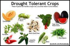 Drought Tolerant Crops