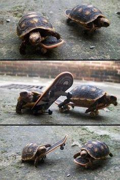Turtles racing on skate boards. Hahahahahahahahahahahahahahahahaha!!