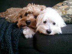Furry friends