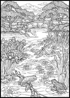 coloring page ~ Summer Pond