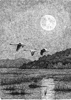 Three swans fly over a marsh near Alma, Wisconsin. ~By Elva Paulson