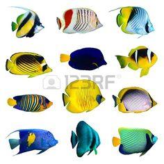 Colección de peces tropicales sobre fondo blanco.