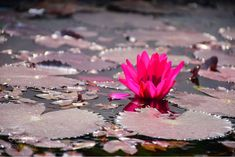 SocialFoto / The beautiful pink flower by ashurauni