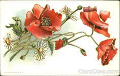 Poppies Flowers