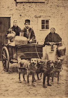 25 Interesting Vintage Pictures of Dog Carts and Milk Women in Belgium from the Late 19th and Early 20th Centuries