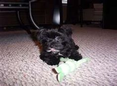 And this looks like JJ, my other morkie.