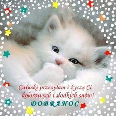 Good Night All, Wish, Album, Humor, Animals, Image, Motto, Google, Fotografia