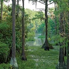 Cross Creek, FL, where the River Styx flows, made famous by author Marjorie Kinnan Rawlings Places In Florida, Visit Florida, Florida Living, Florida Travel, Florida Beaches, New Smyrna Beach Florida, Old Florida, Vintage Florida, Naples Florida