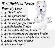 MUST READ if you own a WESTIE!