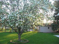 Плодові дерева і чагарники на садовій ділянці: схема посадки, як правильно розмістити рослини в саду, фото
