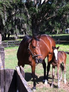High Cotton Filly...