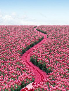 15 Stunning Photographs for Your Inspiration - Tulips Everywhere