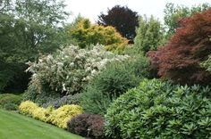 Shrub border layering with Acer, Berberis, Euonymus and Hebe   Flickr - Photo Sharing!