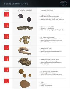 AKC Dog Poop Chart - causes, symptoms, and treatments for diarrhea