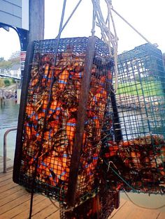 Lobster Catch of the Day in Perkins Cove, Ogunquit Maine