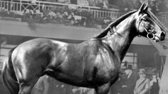 1929 Nightmarch - Melbourne Cup winner - Google Search