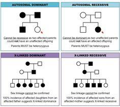 pedigree charts: inheritance cheat sheet