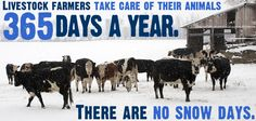 """When its blizzarding out, you're shoveling a path through the snow for your animals. ... Farmers take care of their livestock 365 days a year, there are no """"snow days"""""""
