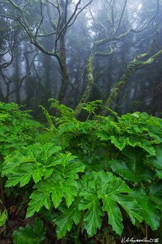 Atlantic Rainforest by Nicolas Alexander Otto Haunted Woods, Ferns Garden, Forest Floor, Amazon Rainforest, Environment Concept, Walk In The Woods, Tree Forest, Science And Nature, Wonders Of The World