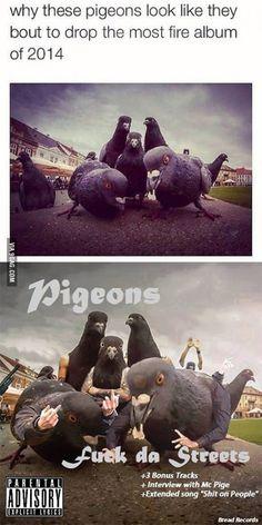 Backstreet pigeons