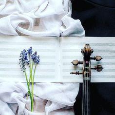 Są szafirki jest szczęście! Dobrego dnia Instaprzyjaciele     Have a good Saturday full of spring and music!       ___________________________ #violin   #violino   #violinist   #violingirl   #violinlife   #violinlove   #geige   #fiddle   #skrzypce   #muzyka   #szafirki   #skrzypaczka   #artist   #luthier   #opera   #classicalmusician   #instrument   #flowerpower   #flowerstagram   #flowermagic    #still_life_gallery   #tv_simplicity   #simplenaturefinds   #jj_musicmember   #bestmusicshots…