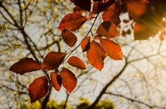 #Nature #landscape #leaves