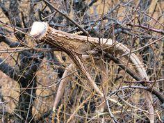 How to Hunt for Deer Antler Sheds | Outdoor Life