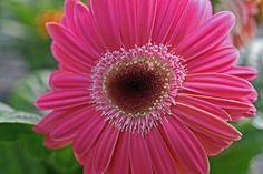 Nature Photography Heart Daisy