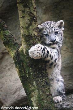 cria de leopardo                                                                                                                                                                                 Más