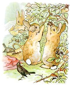Flopsy, Mopsy, and Cotton-tail, who were good little bunnies, went down the lane to gather blackberries: