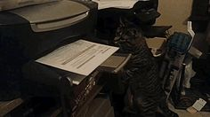A cat receiving an important fax... in a hurry