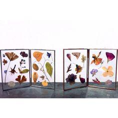 Beautiful new framed dried flowers by Tuin van Judith at Hutspot Van Woustraat.