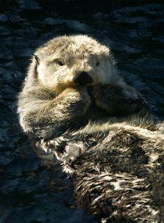 sea otter!