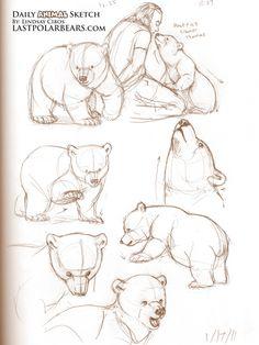 cub sketches