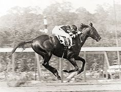 War Admiral wins the Belmont, in spite of stumbling and tearing off part of his hoof. He beat his father's track record (Man O' War).