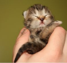 caring for a newborn kitten.PNG