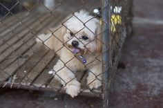 Arizona Fights Puppy Mills with New Law