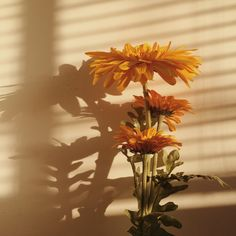 ❂everyone нaѕ тнeir yellow painт❂ aesthetic ~yellow~ yellow flowers flowers sunflower nehrd Orange Aesthetic, Flower Aesthetic, Aesthetic Vintage, Sun Aesthetic, Yellow Aesthetic Pastel, Belle Aesthetic, Aesthetic Beauty, Images Esthétiques, Nature Architecture