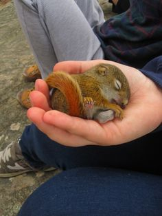 Forget a dog - I want a pet chipmunk!