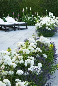 white roses, and foxgloves against an evergreen hedge. Lavender with white roses and foxgloves against an evergreen hedge.Lavender with white roses and foxgloves against an evergreen hedge. Landscaping Plants, Front Yard Landscaping, Landscaping Ideas, Garden Plants, Outdoor Landscaping, Herb Garden, Pavers Ideas, Garden Bar, Terrace Garden
