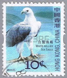 White-bellied sea eagle, series devoted to the birds,stamp printed in Hong Kong…