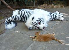 Tiger quadsuit