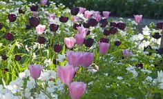 Blumenzwiebeln: Im Herbst den Frühling pflanzen