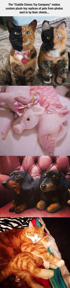 This Company Makes Exact Plush Toy Copies Of Your Pets